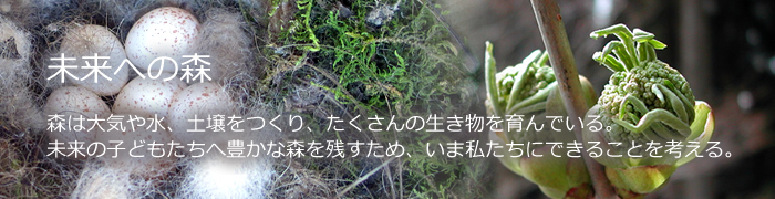未来への森