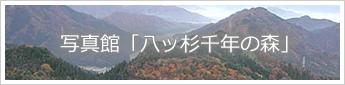 写真館「八ッ杉千年の森」